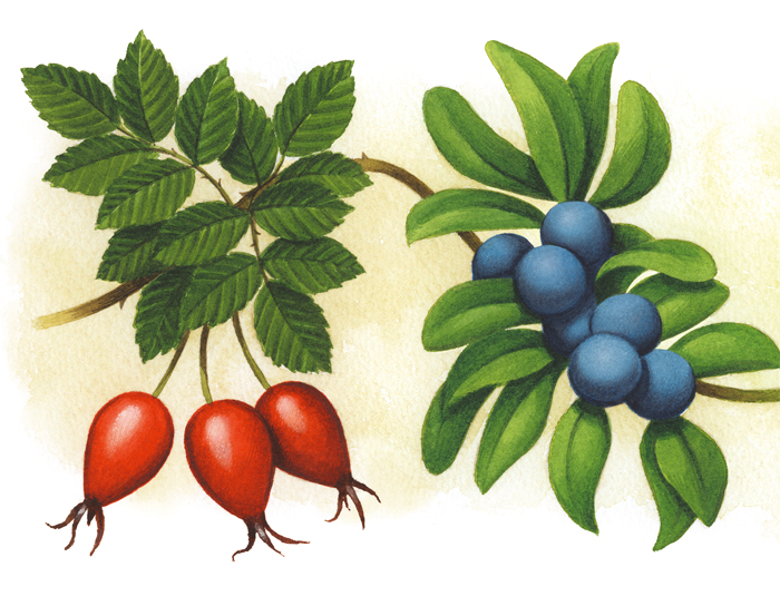 berries_lgeA