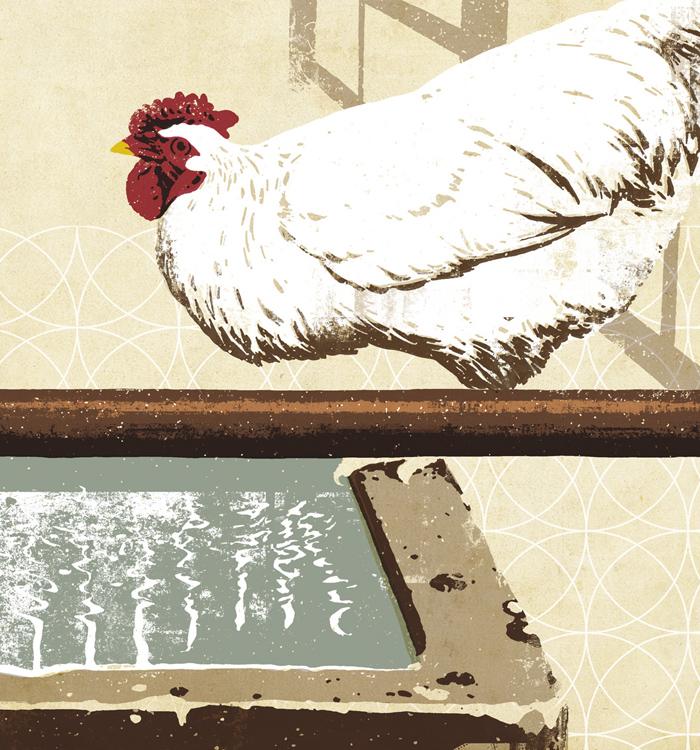 chicken_lgeB